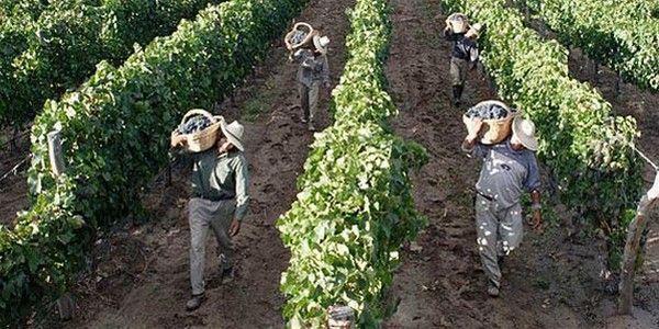 Trabajo Agrario