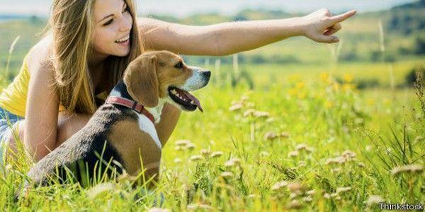 empleo cuidadores perros