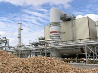 Planta Biomasa