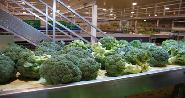envasado brocoli